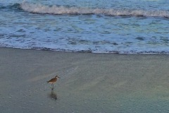Cocoa Beach Bird