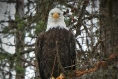 Eagle with a Critical Eye