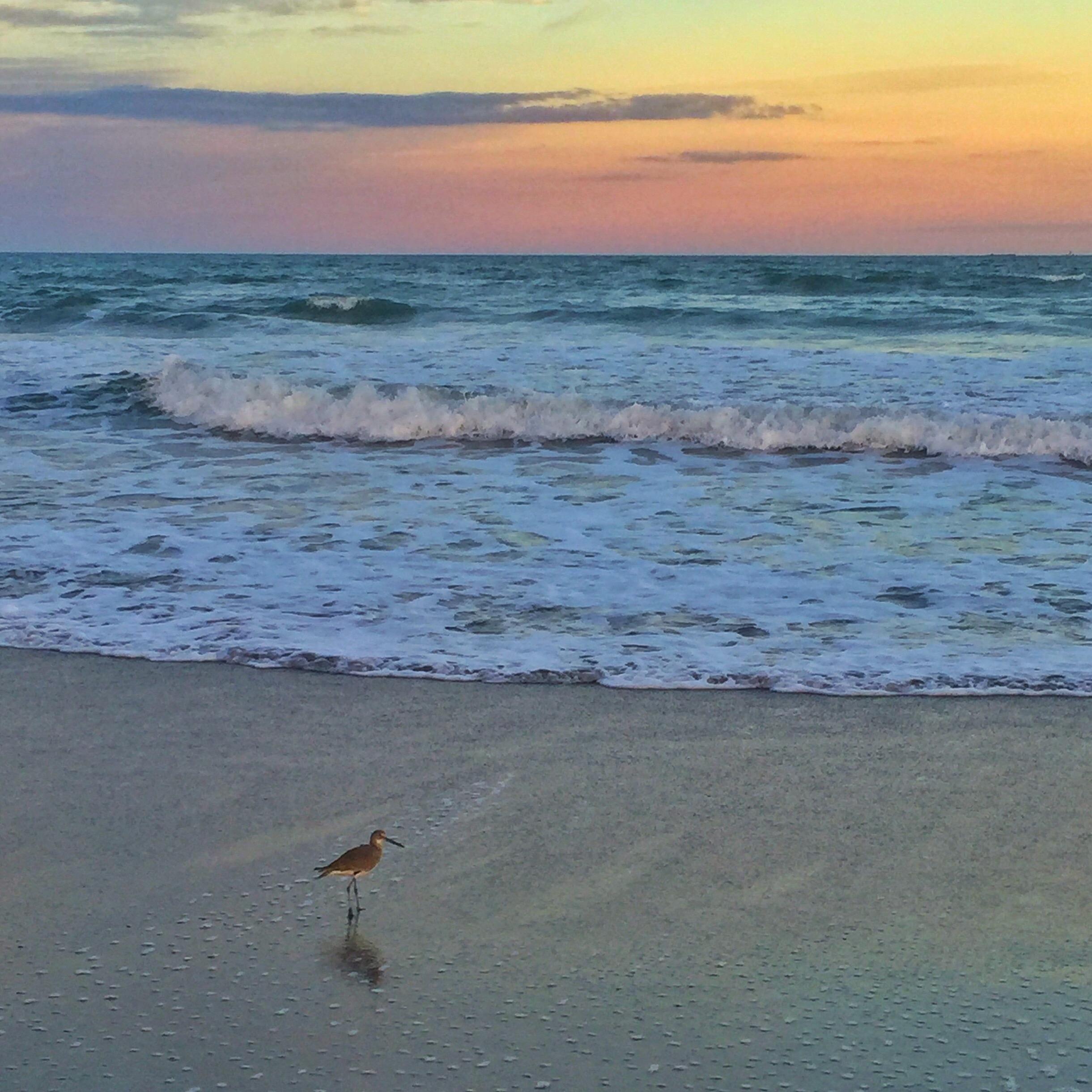 Cocoa Beach Bird